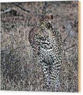 Leopard Hunt Wood Print