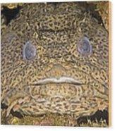 Leopard Toadfish Wood Print