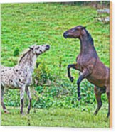 Leopard V Standardbred Wood Print