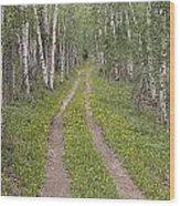 Less Traveled Road Through Aspens Wood Print