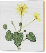 Lesser Celandine, Artwork Wood Print