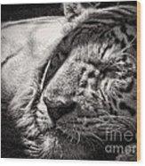 Let Sleeping Tiger Lie Wood Print