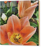 Lets All Dance For The Tulips Are Out Wood Print