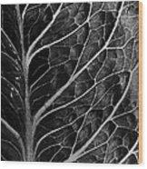Lettuce Leaf Wood Print