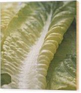 Lettuce Leaf Wood Print by Sheila Terry