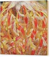 Leucospermum Wood Print