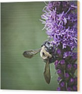 Liatris And Bee Squared 2 Wood Print