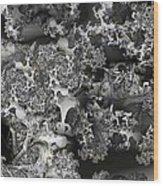 Lichen Like Wood Print