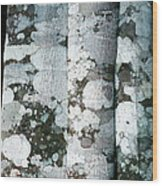Lichen On Cinnamon Trees Wood Print by Georgette Douwma