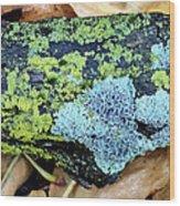 Lichen On Fallen Branch Wood Print
