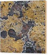 Lichen Pattern Series - 10 Wood Print