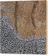 Lichen Pattern Series - 11 Wood Print