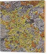 Lichens Wood Print