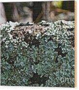Lichens Lace Wood Print