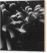 Licorice Sky Wood Print