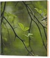 Life And Thorns Wood Print