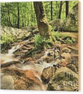 Life On The Rocks Wood Print