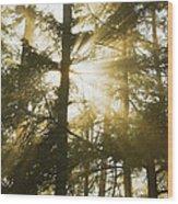 Light Beams Shining Through Trees And Fog Wood Print