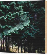 Light Forest Wood Print