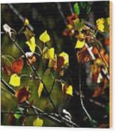 Light On The Leaves Wood Print