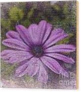 Light Purple Daisy Wood Print