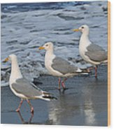 Lighthearted Seagulls Wood Print