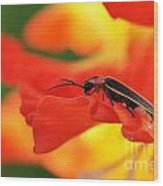 Lightning Bug On Gladiolus Wood Print
