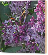 Lilac Butterfly Wood Print