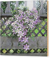 Lilac Clematis Flower Vine Basking In Sun Rays On A Wood Garden Arbour Wood Print