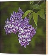 Lilac Flower Blossoms No. 319 Wood Print
