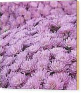Lilac Frost Wood Print
