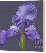 Lilac Iris Wood Print