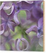 Lilac Syringa Sp Flower, Close Wood Print