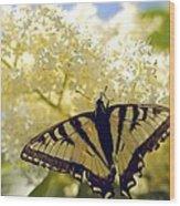 Swallowtail Lilac Spring Photo Wood Print