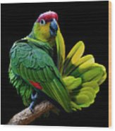 Lilacine Amazon Parrot Isolated On Black Backgro Wood Print by Photo by Steve Wilson