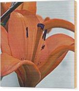 Liliaceae Orange  Wood Print