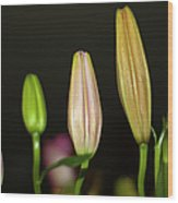 Lilies In A Row Wood Print