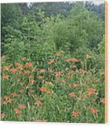 Lillies In The Valley Wood Print