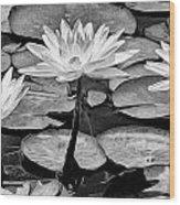 Lilly Beuaties Wood Print
