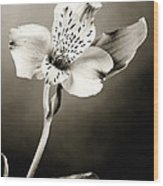 Lilly Flower B And W Wood Print