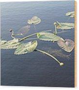 Lilly Pads Adrift Wood Print