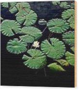 Lily Alone Wood Print