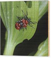 Lily Beetles Mating Wood Print