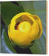 Lily Bloom Wood Print