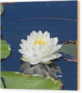 Lily Dreams Wood Print