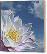 Lily Flower Against Sky Wood Print