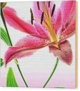 Lily High Key Wood Print