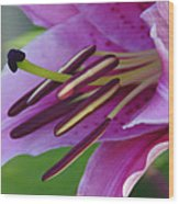 Lily In Full Bloom Wood Print