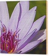 Lily Life Wood Print