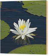 Lily Pad And Flower Wood Print